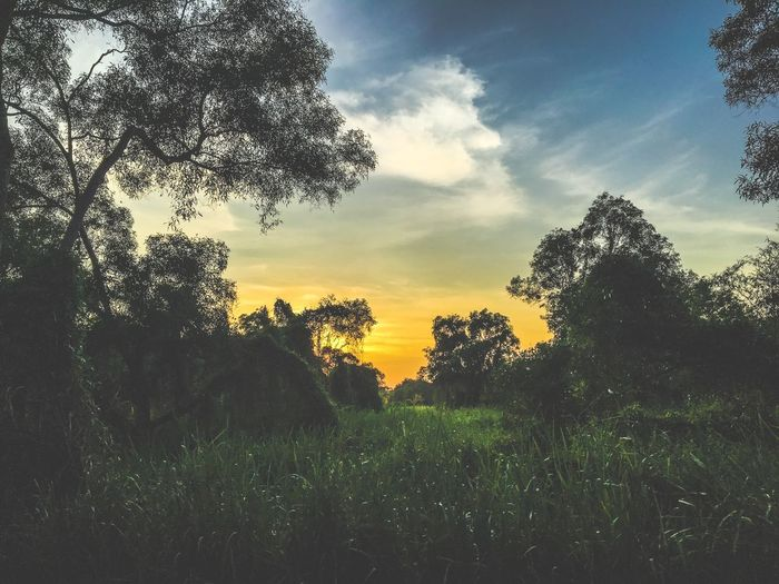 Beauty In Nature Cloud Cloud - Sky Day Field Grass Grassy Green Color Growth Idyllic Landscape Nature No People Non Urban Scene Non-urban Scene Orange Color Outdoors The Great Outdoors With Adobe Remote Scenics Sky Sunset Tranquil Scene Tranquility Tree