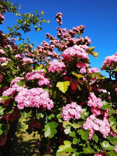 Flowers. Цветы