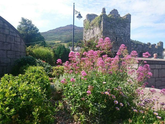 Ireland🍀 Discover Ireland Eyeem Ireland carlingford co.louth. Castles In Ruin Castles Beautiful Surroundings