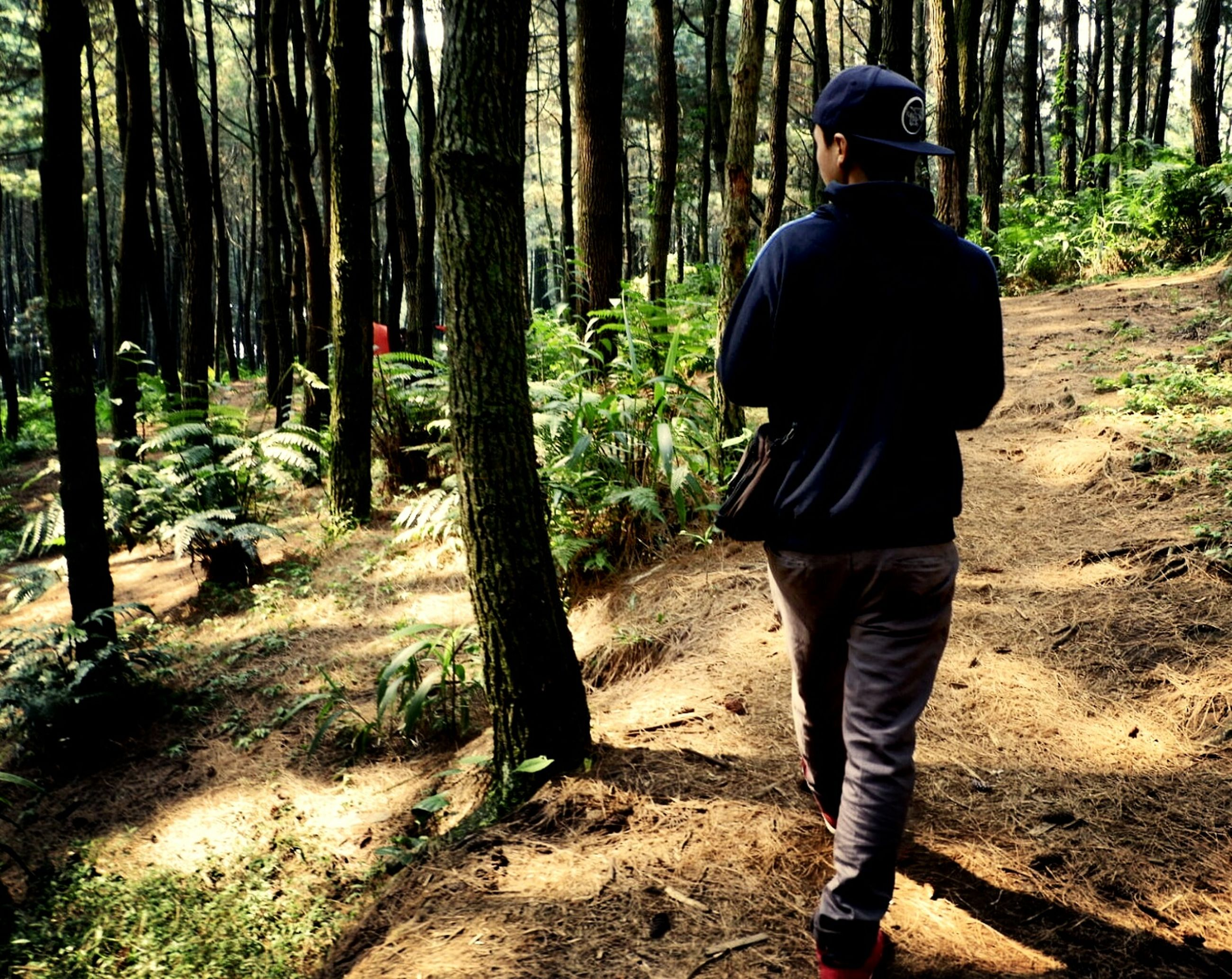 tree, forest, land, one person, plant, real people, rear view, nature, day, leisure activity, men, lifestyles, trunk, woodland, tree trunk, full length, clothing, standing, walking, outdoors