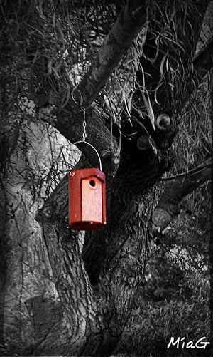 Momentos en los que me gustaría ser pájaro, para refugiarme del exterior. Naturaleza Colorsplash Eyem Best Shots Vilanova I La Geltru
