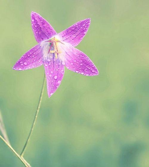 Purple Beauty 💜 Purple Beautiful Spring Flowers Naturephotography Naturecaptures Macrophotography Macrocaptures Ilovespring Igflowers Macro_brilliance Macro_brilliance_flower Igslovenia Slovenia