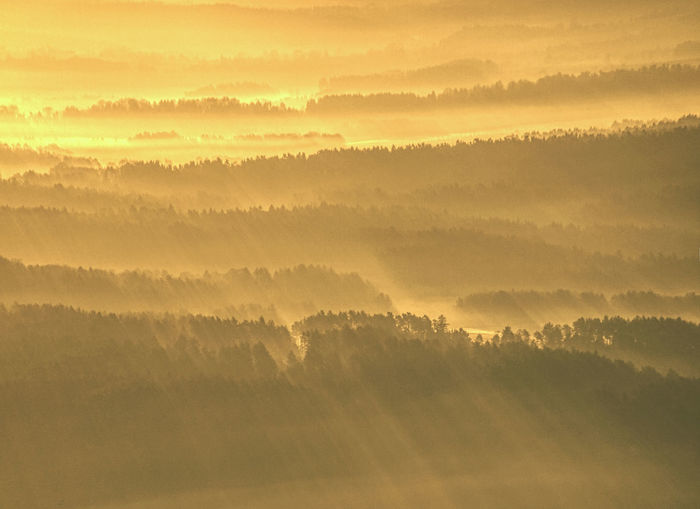 Misty awaking of beautiful fairy valley. peaks of rounded hills cut creamy foggy clouds.
