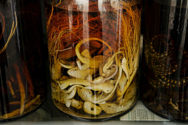 Close-up of dead animals in jar