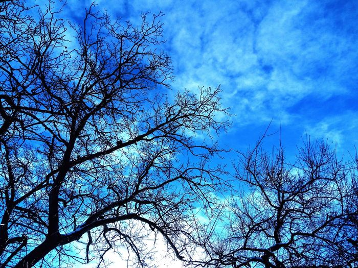 Sky Tree Blue Cloud - Sky Nature Beauty In Nature Outdoors No People Day Mobilephotography Letv LeEco LeTv X600