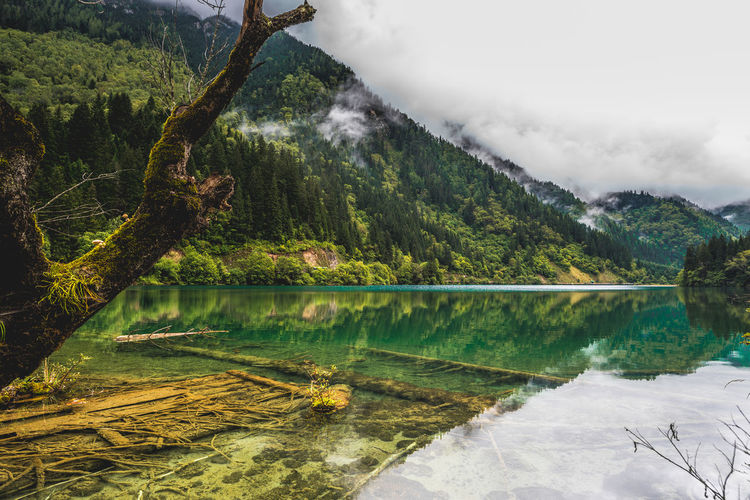View in JiuZhai National Park Outdoors Forest Green Color Cloud - Sky Reflection Idyllic Sky Day Non-urban Scene Nature No People Lake Plant Mountain Tranquil Scene Tranquility Scenics - Nature Water Tree Beauty In Nature