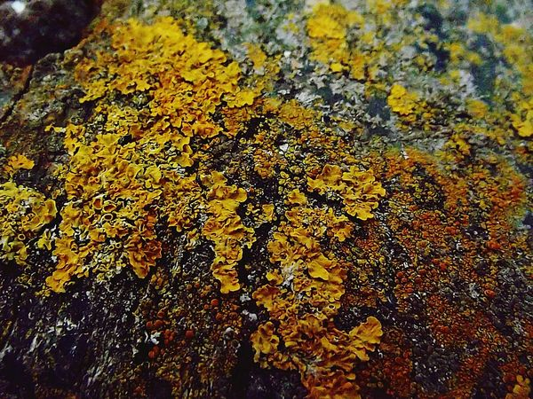 SuperMacro Macro EyeEm Nature Lover Wood Rustic Rustic_wonders Micro Nature Microphotography Macro_collection Yellow