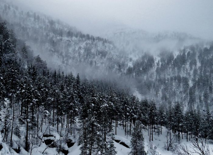 Album Cover Beauty In Nature Borknagar Cold Temperature Day Eksingedalen Fog Forest Landscape Mountain Nature Outdoors Scenics Sky Snow Snowing Tranquil Scene Tranquility Tree Weather Westernnorway Wilderness Winter