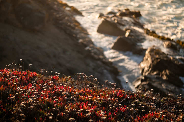 Close-up of flowering plants on rocks by sea