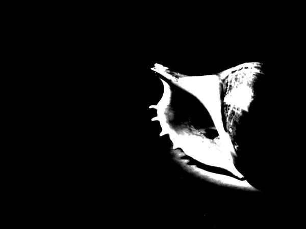 Black and white shell Black Background Human Lips Human Face Studio Shot Young Women Close-up Eyeball Jellyfish Underwater Sea Life School Of Fish Floating In Water Coral Sea Anemone Sensory Perception UnderSea HUAWEI Photo Award: After Dark