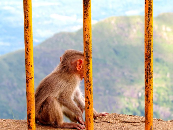Close-up of monkey sitting on window sill against mountains