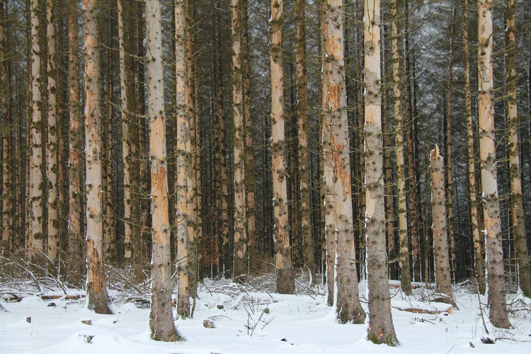 Ill trees in forest during winter