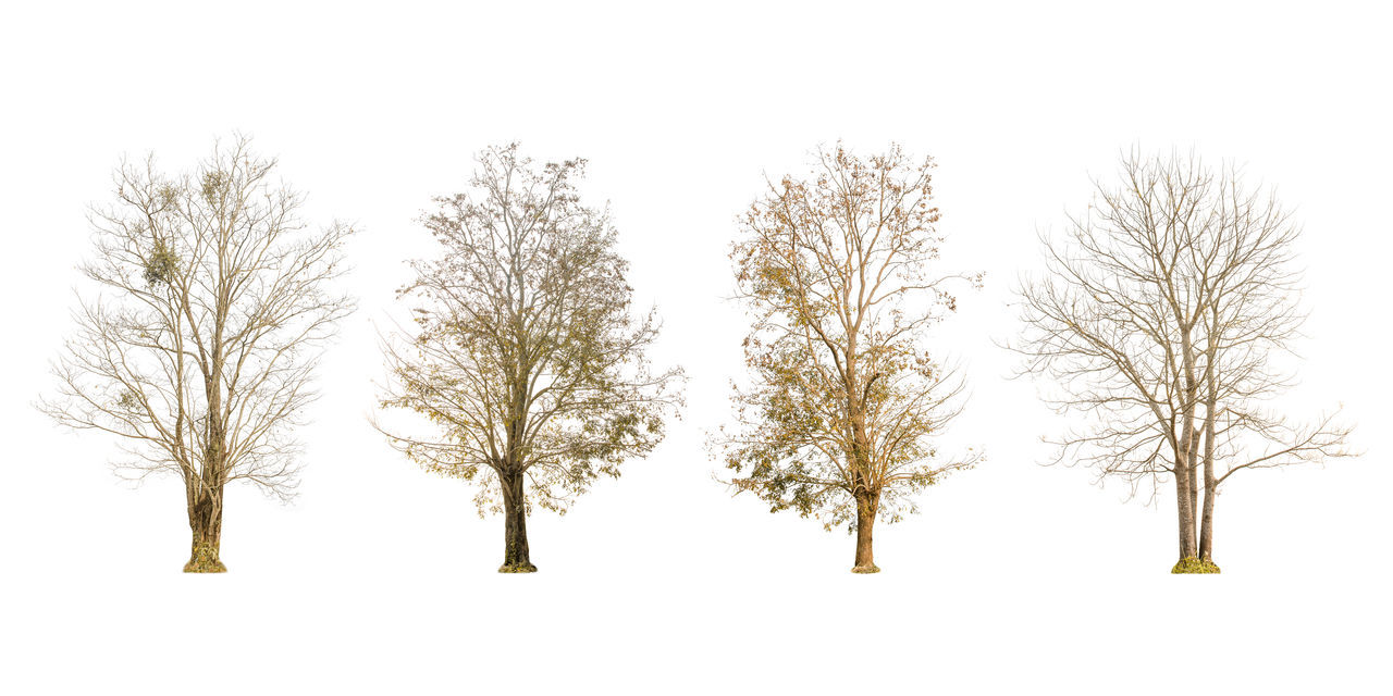 Set of dry tree shape and Tree branch on white background for isolated, Multiple dead tree on white background with clipping path. Branches Clipping Dries Dry Tree Green Growth Isolated Nature Plant Shape Shapes Tree Trees Branch Clipping Path Dead Dry Ecology Environment Forest Isolated On White Isolated White Background Large Outdoors Spring