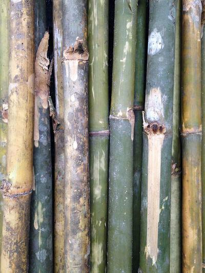 Full frame shot of bamboo tree trunk
