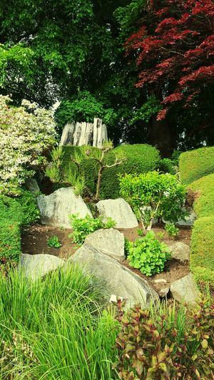 Rock garden in Canada Rocks Green Garden Photography Landscaping Peace Arch Trees JessCarrieA