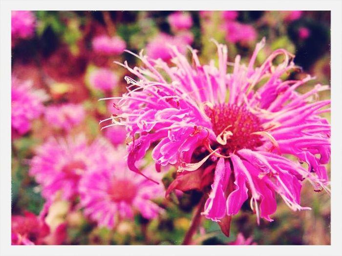 Flower f