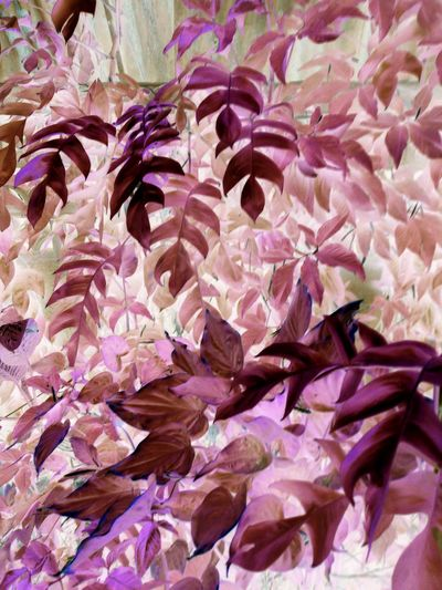 Backgrounds Beauty In Nature Close-up Day Nature No People Outdoors Petal ์Negative Photography