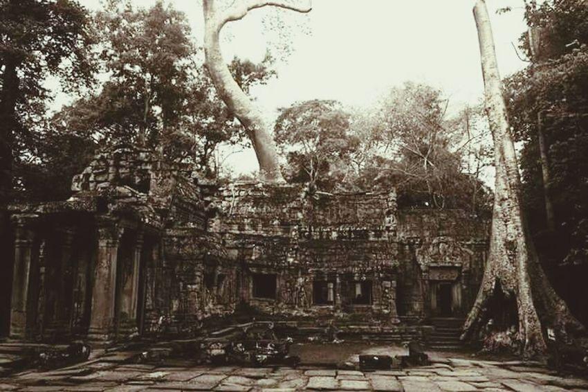Lifeasiseeit John Nelson Ta Prohm Nature Reclaiming Southeast Asia Angkor Wat Tomb Raider  Cambodia Jungle Temple Worldheritage Architecture History Southeastasia