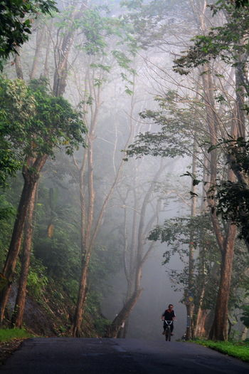 misty morning in Pangandaran Adventure Beauty In Nature Day Forest Full Length Landscape Leisure Activity Lifestyles Men Mountain Nature One Person Outdoors People Real People Rear View Road Scenics Tranquil Scene Tranquility Transportation Tree Summer Sports