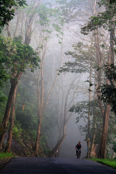 misty morning in Pangandaran Adventure Beauty In Nature Day Forest Full Length Landscape Leisure Activity Lifestyles Men Mountain Nature One Person Outdoors People Real People Rear View Road Scenics Tranquil Scene Tranquility Transportation Tree