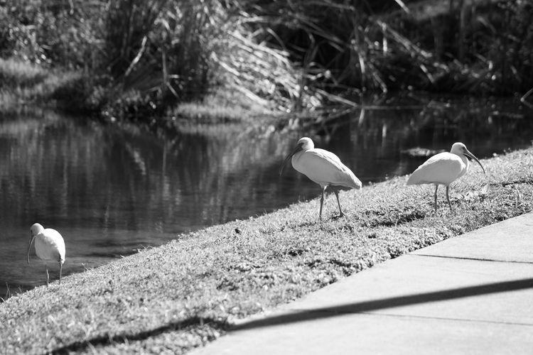 Birds by
