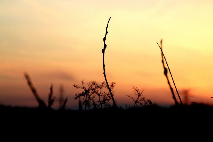 Russia Yekaterinburg Nature Beauty Sunset Branch Filter U4 веточка Закат фон яркиекраски