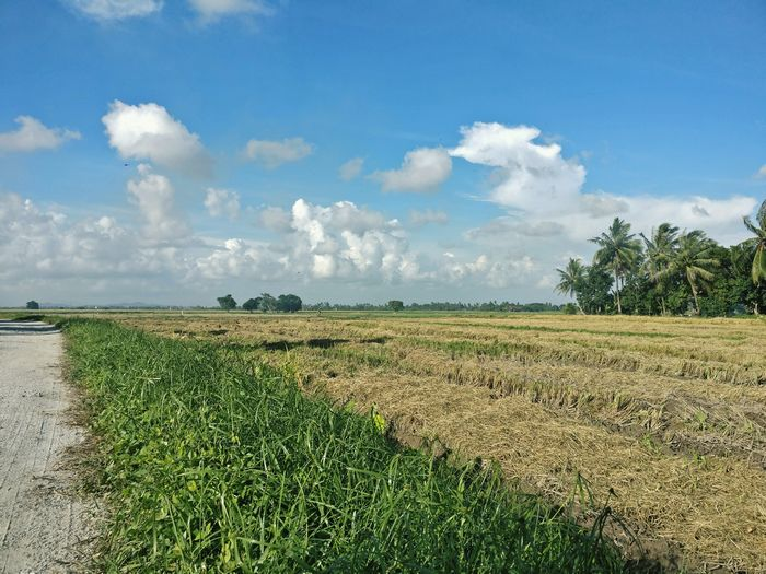 Sky Tranquil Scene Landscape Tranquility Scenics Dirt Road Field Rural Scene Nature Blue Day Beauty In Nature Cloud Plant Non-urban Scene Green Color Cloud - Sky Outdoors Agriculture Dramatic Angles Onepluslife Oneplus3 Travel Oneplusphotography DuaEnamKosongLima