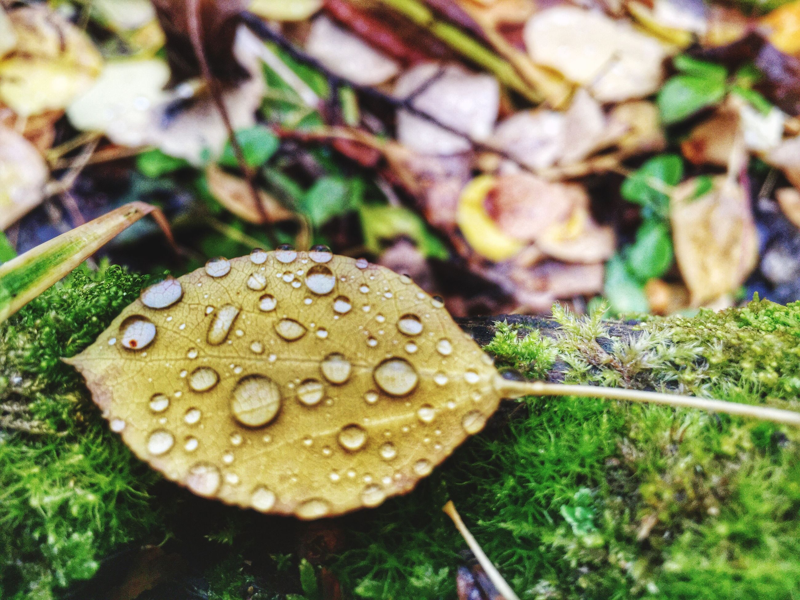 close-up, leaf, growth, wet, water, nature, plant, drop, fragility, green color, focus on foreground, beauty in nature, freshness, natural pattern, selective focus, day, high angle view, outdoors, no people, dew