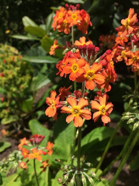 Colorful Flowers Plants And Flowers San Francisco Botanical Garden Flowers,Plants & Garden Flowers Are Blooming Nature_collection Orange Flower No Edit/no Filter