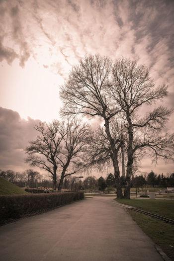 Cloud - Sky Tree