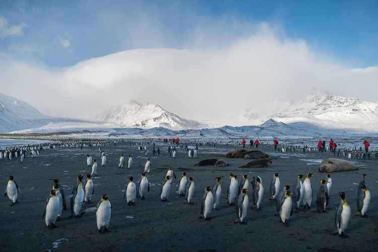 Penguins and snow covered mountains against sky