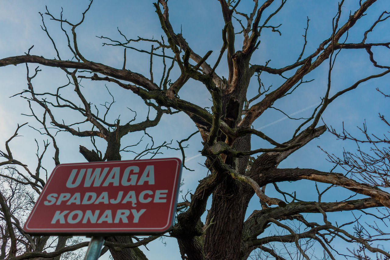 LOW ANGLE VIEW OF INFORMATION SIGN AGAINST TREE