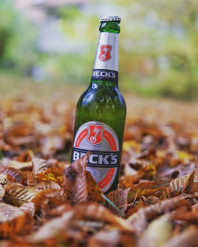 Leaf Autumn Bottle No People Close-up Outdoors Nature Beer Beer Time Bier Bière Becks Beckstime Herbst Herbststimmung Herbstfarben Laub Sony Sony A6000 Sonyalpha Sonyphotography Sigma Sigma30mm F1.4art