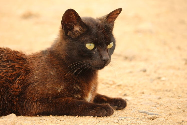 Black cat living at the beach Cat No People Portrait Land Vertebrate One Animal Pets Black Cat Photography Panther Cute Cats Beachlife Lonely Cat Beautiful Cat