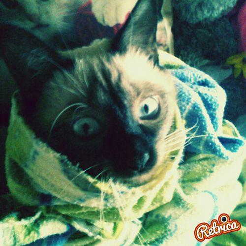 Люблю мучать свою кошечку † First Eyeem Photo