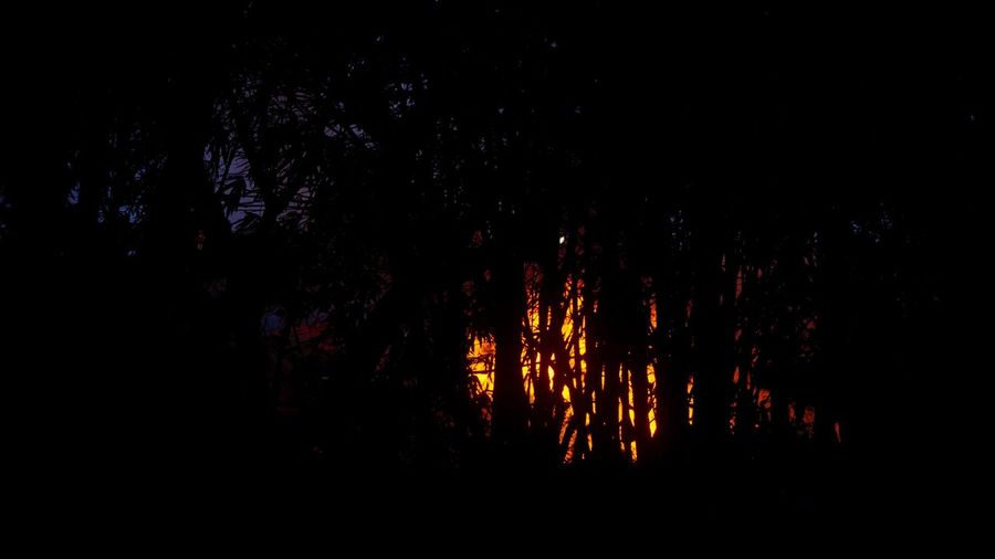 Blame Night Dark Bonfire Burning Nature Forest Fire Fire Outdoors Low Angle View Light Hottest