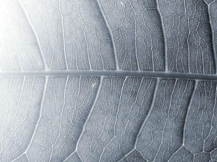 Money Tree Tree Leaf Leaf Veins Nature_collection EyeEm Nature Lover Monochrome Eyeem Monochrome Closeup