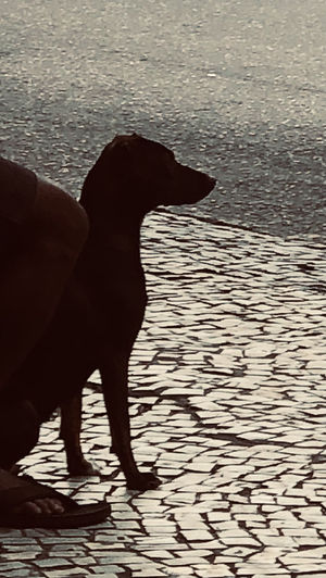 Dog standing in water