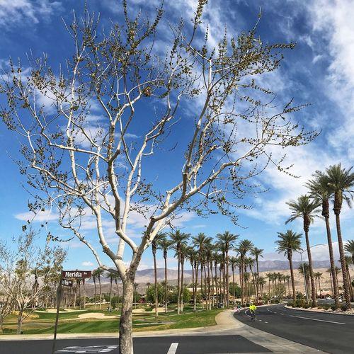 Palm Desert, CA Tree Sky Palm Tree Blue Cloud - Sky Day Outdoors
