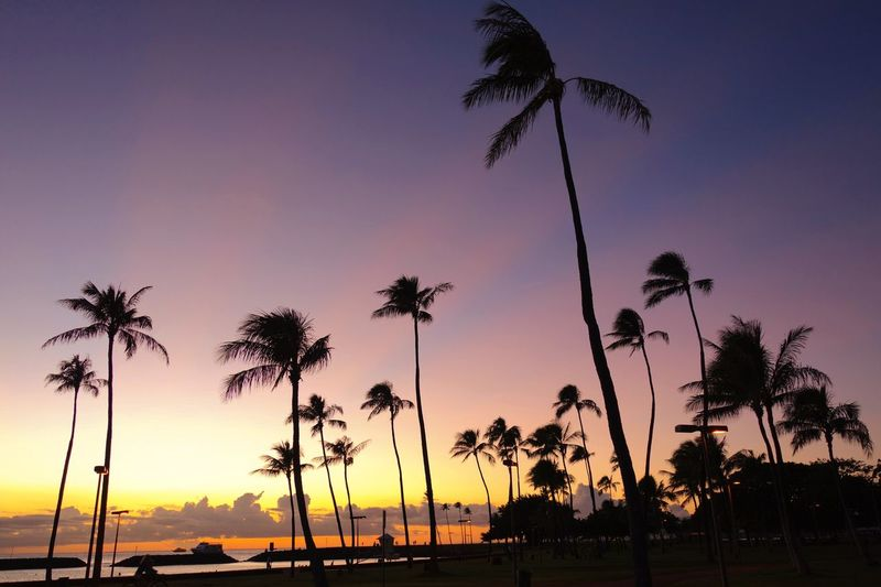 Hawaii Oahu, Hawaii Orange Sky Low Angle View Trees And Sky Treescape Palm Tree Tree Sunset Beauty In Nature Nature Silhouette Tree Trunk Growth Scenics Tranquility Tranquil Scene Palm Frond Beach Horizon Over Water Day No People Outdoors Sky Sea Tee