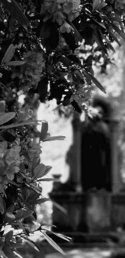 Südfriedhof Leipzig❤ Leipzig Völkerschlachtdenkmal Leipzigliebe Black And White Blackandwhite Blackandwhite Photography Eyeemphotography EyeEmBestPics EyeEm Gallery EyeEmNewHere EyeEm Best Shots Südfriedhof