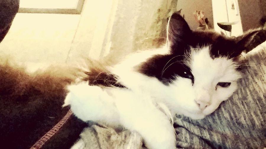 Relaxing Enjoying Life Hello World Sweden I Love My Cats  Cat♡ Beautiful Animals