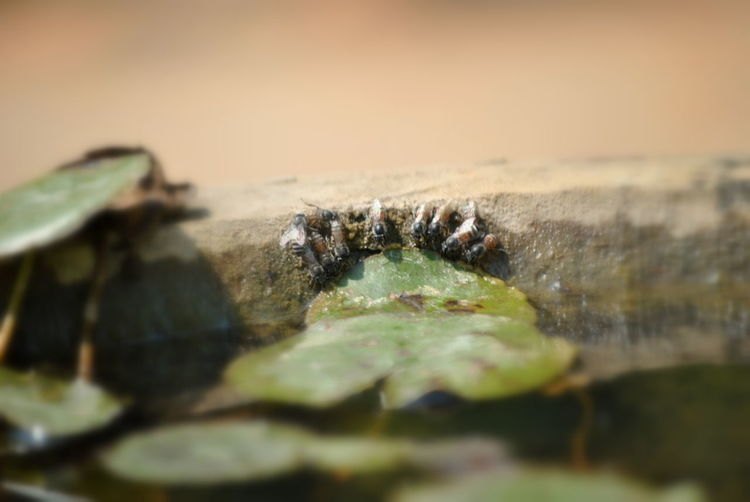 Animal Themes Animal Wildlife Animals Animals In The Wild Beauty In Nature Bees Drinking Water Close-up Day Insect Large Group Of Animals Nature Nature No People Outdoors Water