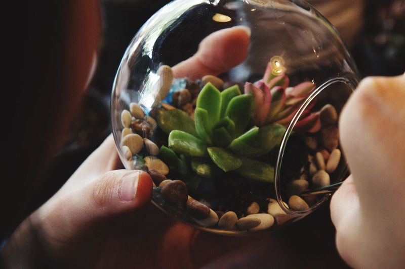 Terrarium Plant Lifestyles Holding Bowl Leisure Activity Freshness Real People Human Hand Human Finger Close-up Focus On Foreground Personal Perspective Indoors  Unrecognizable Person