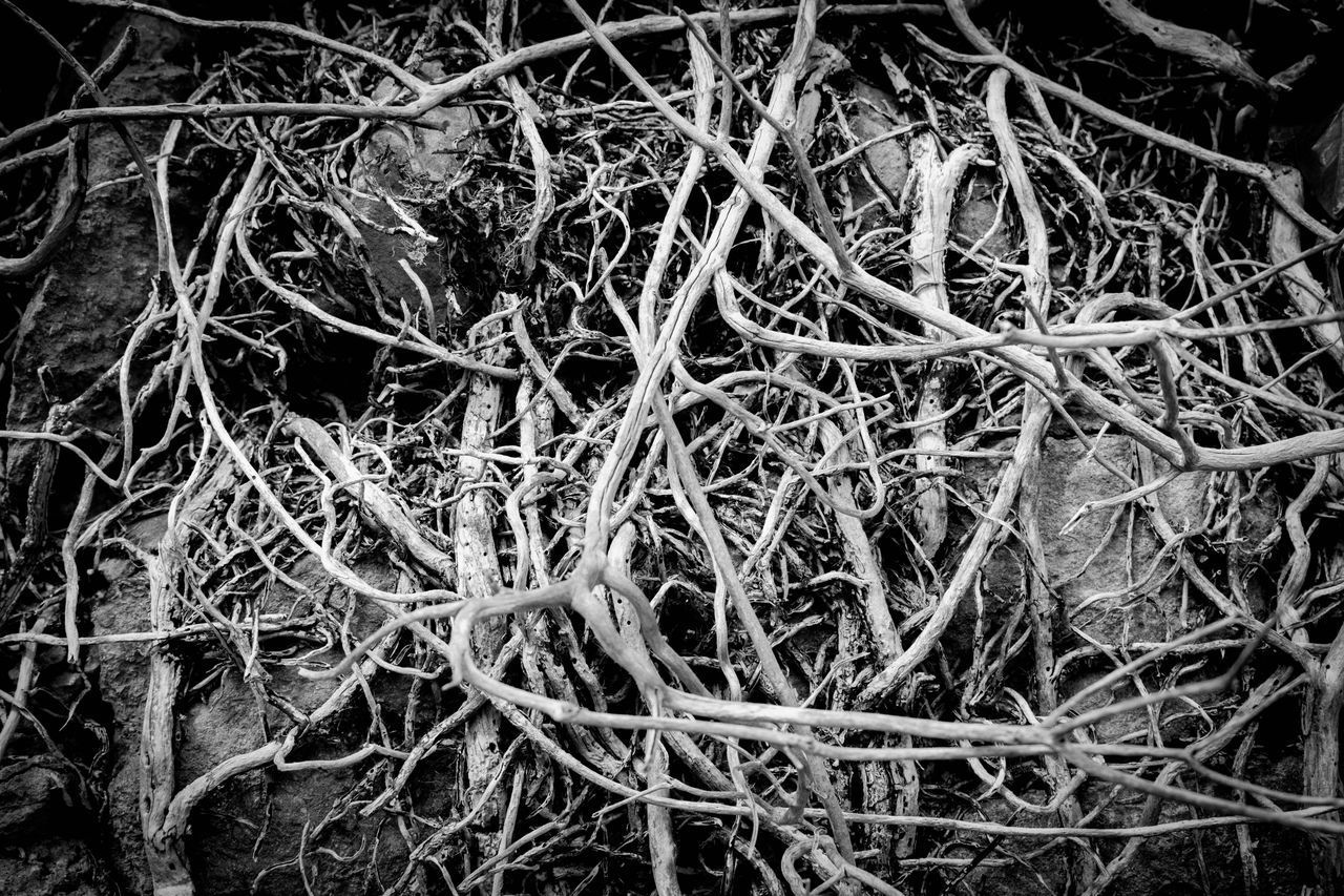 plant, no people, nature, day, full frame, land, complexity, growth, close-up, high angle view, field, backgrounds, twig, plant part, tangled, outdoors, dry, tranquility, messy, selective focus