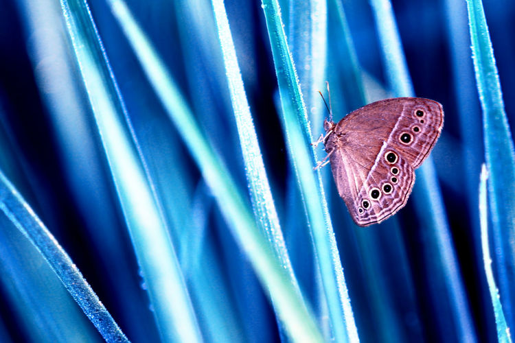butterflies on twigs Animal Blue Animal Themes Insect Close-up Animal Wing No People Animal Wildlife One Animal Invertebrate Butterfly - Insect Animals In The Wild Indoors  Pattern Focus On Foreground Nature Selective Focus Vertebrate Zoology Butterfly