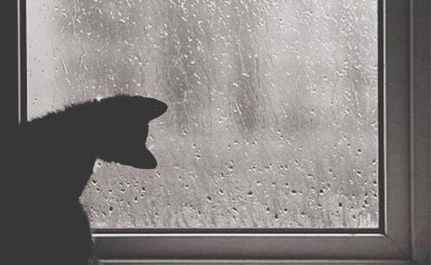 Cat Rain Window Wet RainDrop Pets Looking First Eyeem Photo