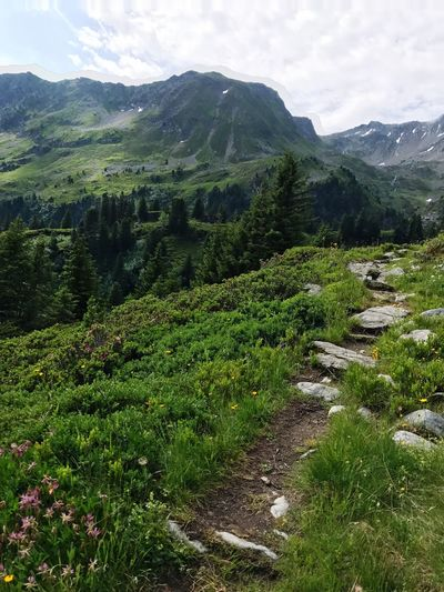Hiking Trail Path Alps Nature Green Color Growth Mountain Beauty In Nature Landscape Day No People Outdoors Tranquility Scenics Mountain Range Field