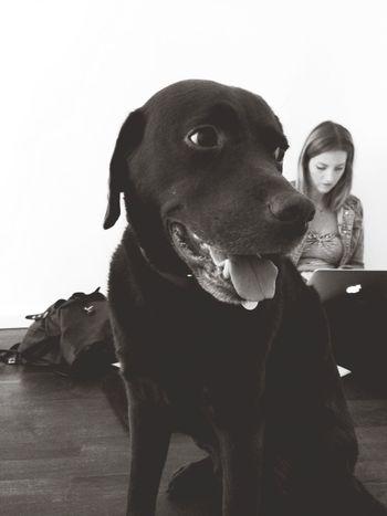 Office Dog geht mir nicht von der Pelle.