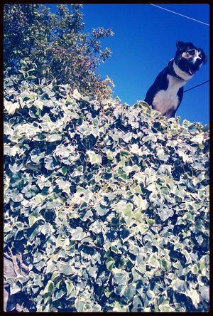 The Guardian Mydog♡ Sunnyday Sky